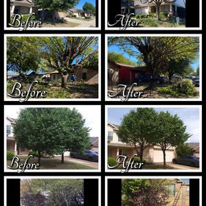 Tree Trimming for Sale in Fort Worth, TX