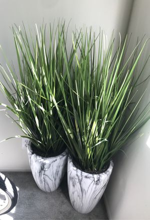 Two beautiful decor plants for Sale in Beverly Hills, CA