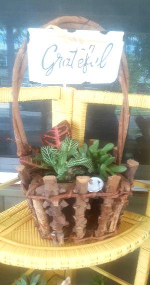 Live plants for Sale in Croydon, PA