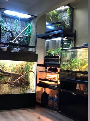 Exo terra with leachianus for Sale in Riverside, CA