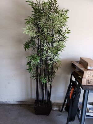 Palm plant for Sale in Covina, CA
