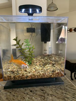 Tetra LED Cube Shaped 3 Gal on Aquarium with Pedestal Base for Sale in Pumpkin Center, CA