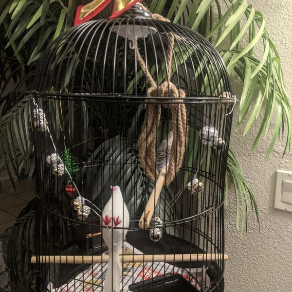 Cute Little Christmas Bird Cage