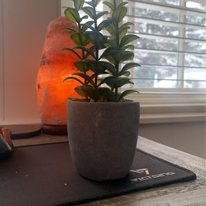 succulent house plant for Sale in Medfield, MA