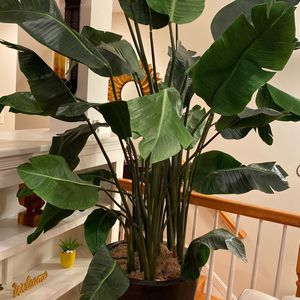 8ft Artificial Plant - Tropical plant for Sale in Fairfax, VA