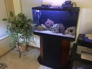 Beautiful 29gal Saltwater Aquarium with stand. for Sale in Fort Pierce, FL