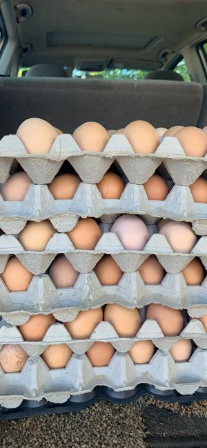 Fresh organic brown eggs in Tracy NOw got 6 flats left orgánicos horita pasando Tracy si gustan for Sale in Tracy, CA