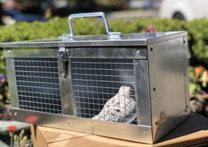 Racing Carrier Pigeon, Small Pets, Birds Transporter Crate Cage-Made In Turkey-RARE for Sale in North Plains, OR