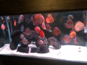 Fish tank, fresh water decorations for Sale in City of Industry, CA