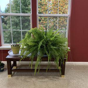 BoasternFern Plant for Sale in Ashburn, VA