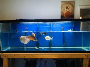 Aquarium PACU fish tank for Sale in Coral Gables, FL