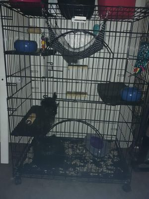 Cage & male famle chowchillas for Sale in Fresno, CA