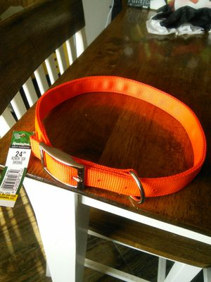Dog collar for Sale in Chandler, AZ
