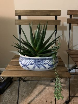 Indoor plants for your urban jungle for Sale in Lexington, KY