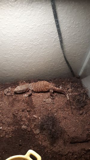 Will buy reptiles or take reptiles for Sale in Rapid City, SD