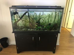55 gallon aquarium. Selling everything. for Sale in Arlington, VA