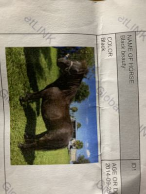 Pony for Sale in Palm City, FL