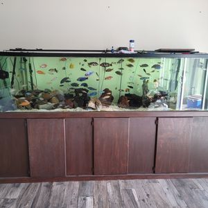 240 Gallon Aquarium Tank With Everything Included for Sale in Santa Ana, CA