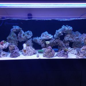Fish Tank Bettas for Sale in West Covina, CA