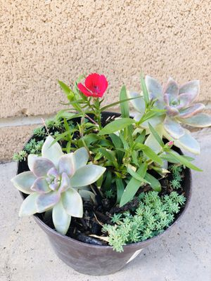 plants for Sale in Chino, CA