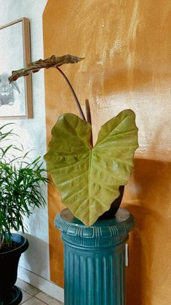 Elephant Eat Plant for Sale in Poinciana,  FL