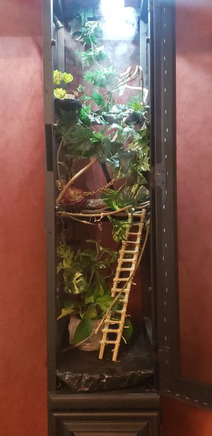Custom Chameleon (Reptile) Enclosure for Sale in Pace, FL