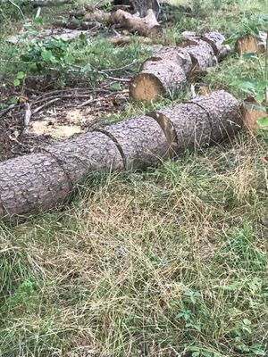 Free fire wood for Sale in Fort Washington, MD