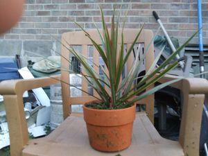 Live house plant good and heathy for Sale in Murfreesboro, TN