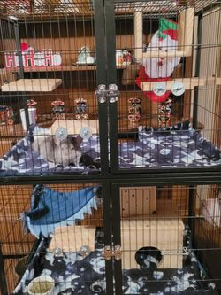 3 Level Critter Cage for Sale in Ravenna,  OH