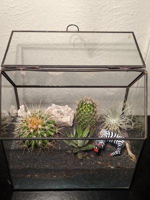 Succulent in glass terrarium for Sale in Garland, TX