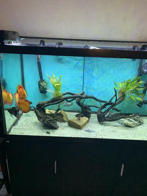 Aquarium Discus for Sale in Davie, FL