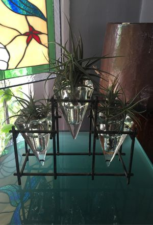 Air Plant Trio for Sale in Los Angeles, CA