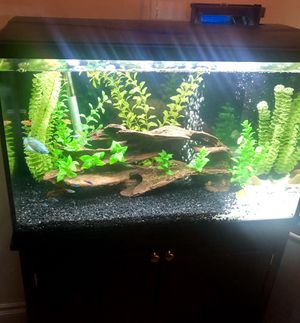 29 Gallon Tank - all supplies/fish included for Sale in West Hollywood, CA