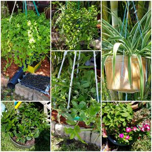 Plants, foliage, hanging baskets, air, succulents, flowering. MUST SELL BULK DISCOUNTS for Sale in Sarasota, FL
