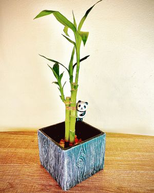 Lucky BAMBOO PANDA square ceramic pot white decorative rocks home decor cute house warming gift birthday gift succulent easy to for Sale in Covina, CA