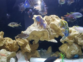 180 Gallon Glass Aquarium for Sale in Dade City,  FL