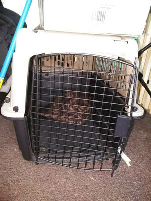 Large animal/dog crate for Sale in Lynn, MA