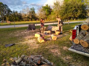 FREE Oak wood for Sale in Orlando, FL