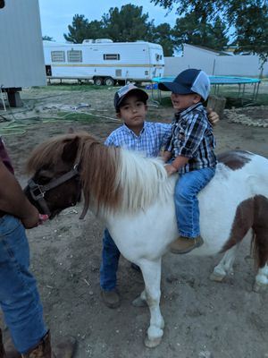 **Pony** for Sale in Odessa, TX