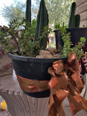 Give Mom a plant for Thanksgiving succulent, cacti, plant for Sale in Phoenix, AZ