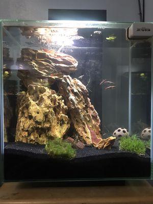 12 gallon Fluval edge fish tank and accessories for Sale in Kirkland, WA