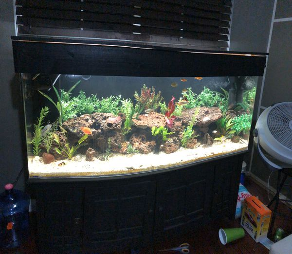 100 gallon aquarium/fish tank for Sale in Palmdale, CA - OfferUp