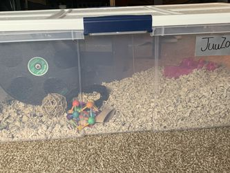 Cute Dark Brown Teddy Bear Hamster With Cage And Accessories for Sale in Gainesville,  FL