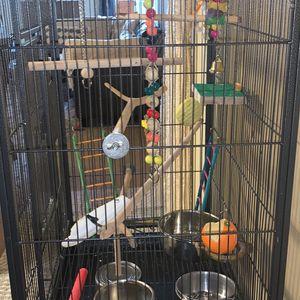 Birde for Sale in Auburn, WA