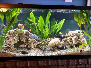 90 gallon fish tank in good condition with fish must sell ASAP for Sale in Aspen Hill, MD