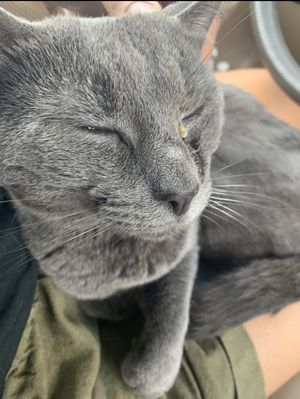Cat for Sale in Morgantown, WV