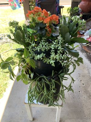 Succulent plants arrangement blooming begonia,blooming white kalanchoe,aluminum plants,donkey tail and string of fish hooks in my tower succulent arr for Sale in Hanford, CA