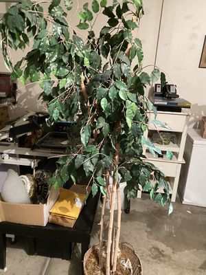 Plants for Sale in North Las Vegas, NV