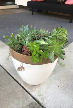 Succulent planter- with lots of variety of plants for Sale in Vancouver, WA
