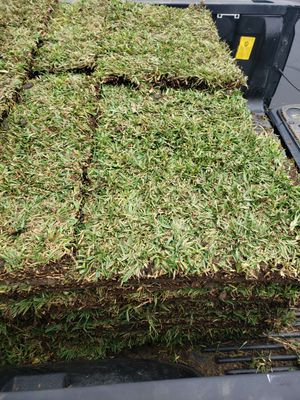St Augustine Sod for Sale in Montclair, CA